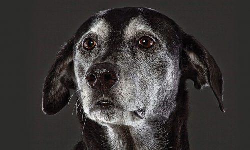 beautiful-old-dogs-jason-ftr
